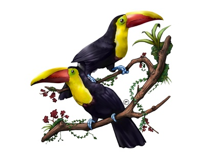 Yellow-throated Toucans Illustration flower travel latino latin south america ecuador brasil animals bird colorful trees amazonas amazon selva jungle tropical illustration tucan toucans digital