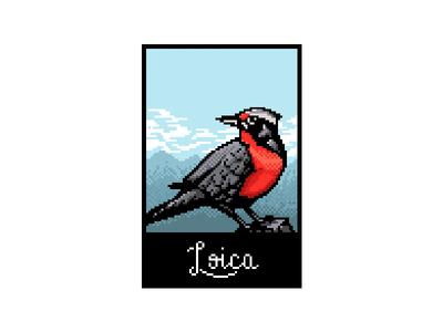Loica