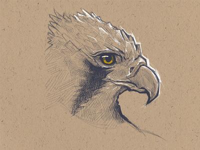 Hawk sketch ilustracion dibujo animal sketch illustration bird