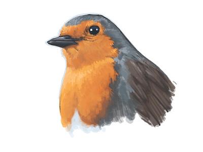 Robin Bird Illustration dibujo ilustracion sketch drawing nature animal orange ipad procreate digital painting pajaro ave pettirosso illustration bird robin