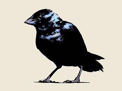 Blue-black Grassquit Bird Illustration gouache watercolor inktober ink comic animal design artist art digital painting ave pajaro ilustracion dibujo pencil sketchbook drawing illustration bird sketch