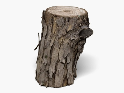 Wood Log - 8K Scan 3D Model