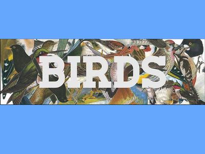 Birds Movie Poster