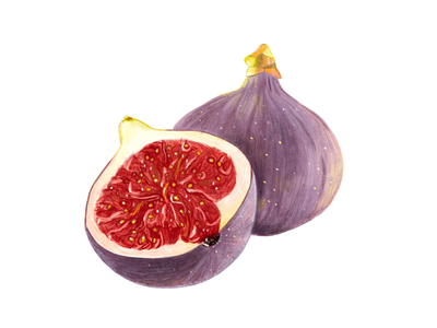 Fig food fruit fig ipad art illustration procreate