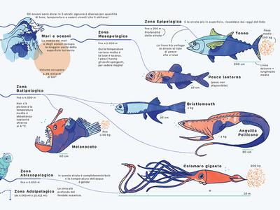 Planet Earth — An infographic children book – Oceans