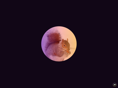 Cute squirrel, CSS gradient light inspiration circle creative digital art gradient web design web visual design dark black figma animal cute squirrel colorful colors color
