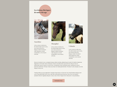 Horse breeding | Stallion section html template wordpress theme wordpress design breeding modern design website design website desktop design stallion stud farm horse breeding horses horse layout design ui minimal graphic design web design figma
