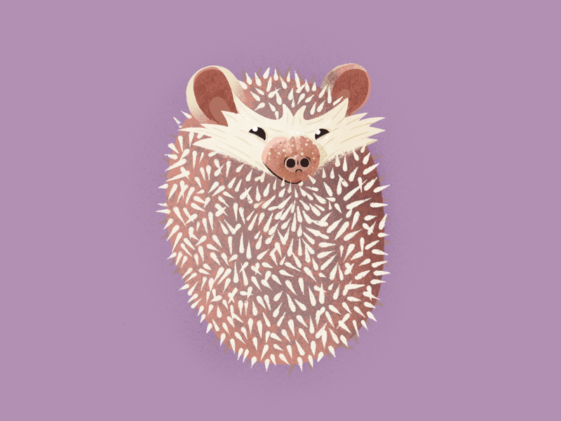 Hedgehog illustration cute hedgehog