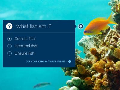 Fish Quiz