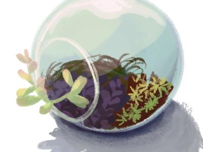 Terrarium hand drawn illustration color study terrarium