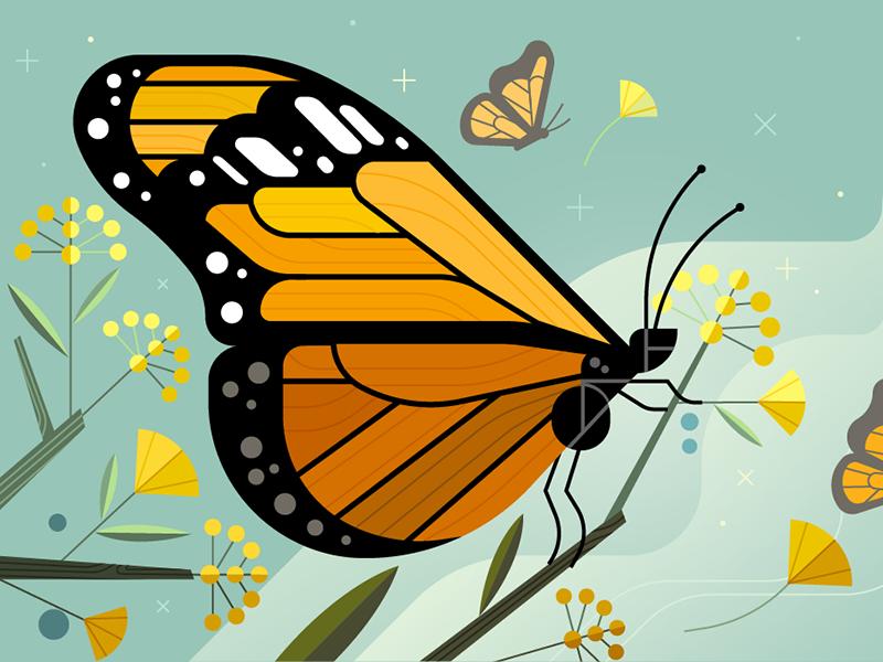 Monarch butterfly 2x