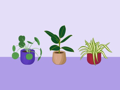 Mini Houseplant Collection spider plant pilea rubber plant adobe fresco vector illustration plant collection potted plant houseplants plants
