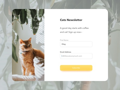 Newsletter Sign Up Form grid yellow lead magnet modal cute form design cat