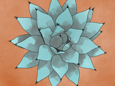 Cabbage Head Agave water color plant illustrator photoshop illustration agave