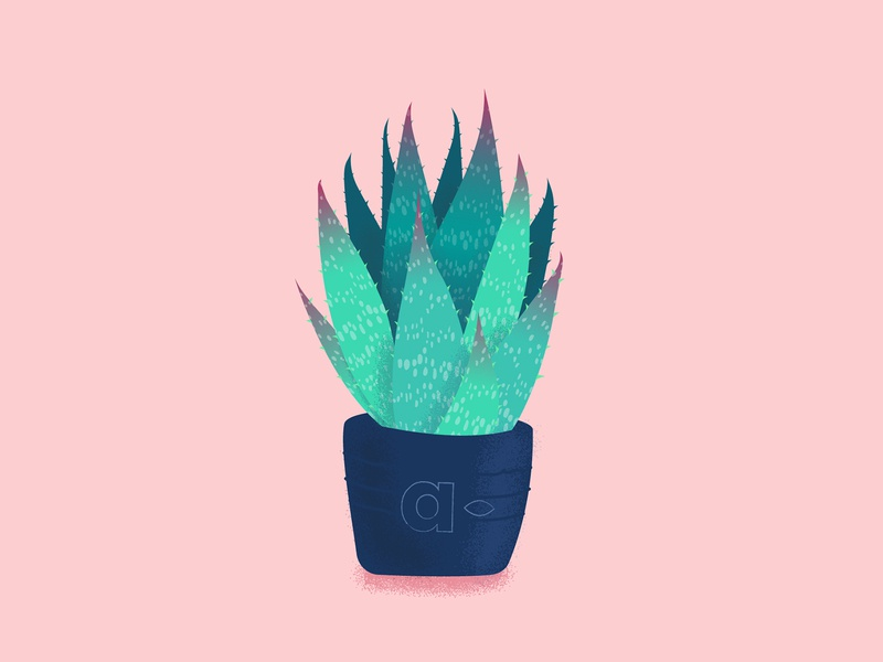 Aloe vera illustration for Aurelia