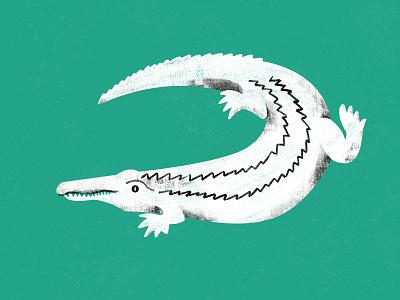 Philippine Crocodile digital photoshop illustration art crocodile illustration