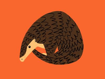 Chinese Pangolin digital illustration art photoshop animal illustration pangolin