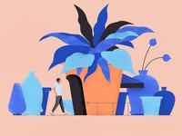Plants & vases