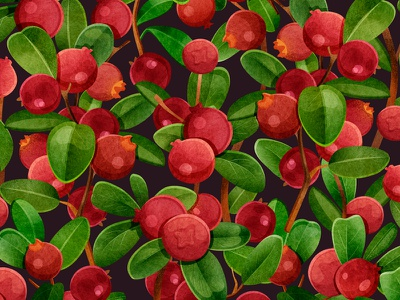 Lingonberry pattern branding texture fabric textile design food plant watercolor print berry botanical seamless pattern illustration