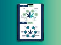 BMS - CBD vs THC Infographic