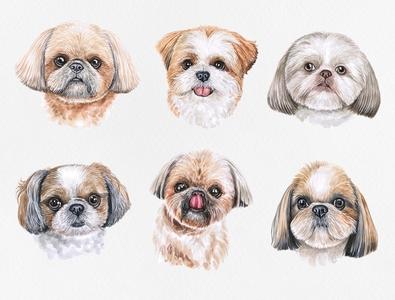Watercolor shih tzu shih tzu draw pets dog puppy cute watercolor art pet animal watercolor illustration