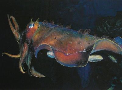 Cuttlefish 2019