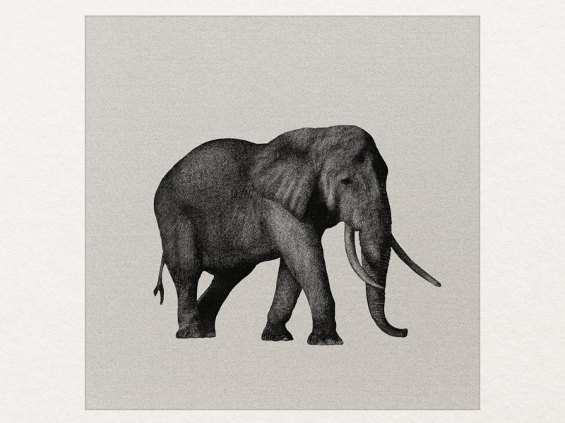 African Bush Elephant art direction artist artwork art illustration