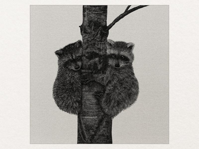 Raccoons illustration art
