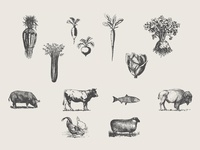 Wild Roots - Vintage Icons