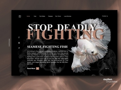 Betta Fish online guide - UX/UI Concept Page Design