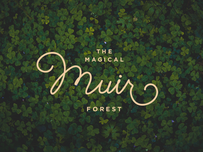 Magical Muir branding magic type lettering typography forest woods muir