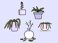 Winter Houseplants
