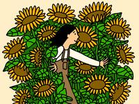 Sunflower Fields - detail shot