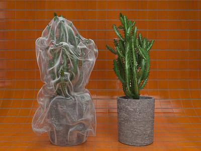 Shrink Bubble Plastic Wrap tiles bubble plastic cactus xparticles redshift3d redshift cinema4d