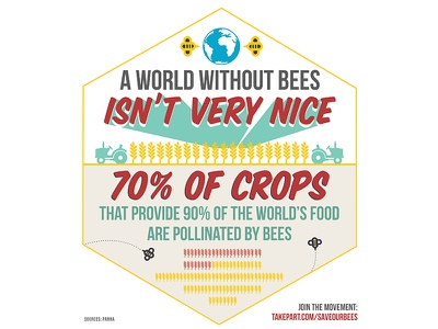 #SaveOurBees Infographic infographic illustration bees