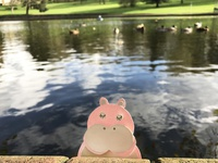 Paper Hippo Outdoors