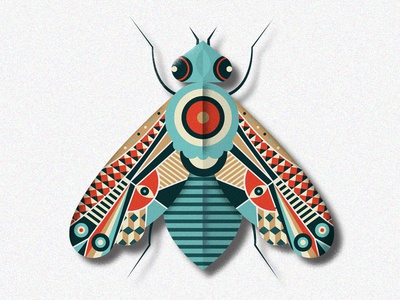 Pretty Fly symmetry illustration pattern moth bug animal wing insect fly