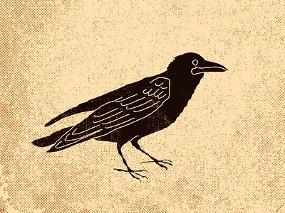 Blackbird black bird
