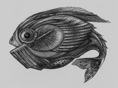 FISH pencil drawing fish illustration line art graphic sketch
