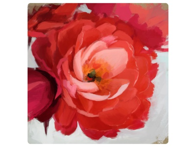 Flower roses nature illustration sketching painting design pink red art illustration adobe photoshop