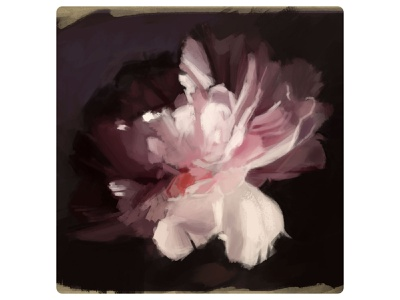 Flower sketch roses pink purple painting adobe photoshop art illustration