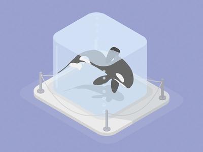 Whale captivity