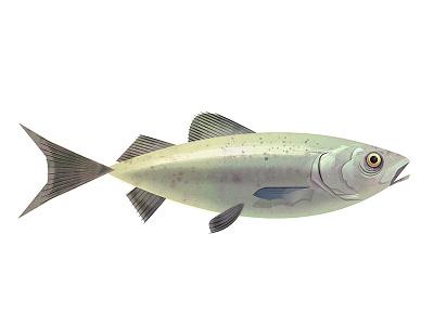 Fish prop fish retro illustration vector james gilleard