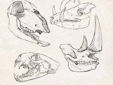 Sketch Animal Skulls #2