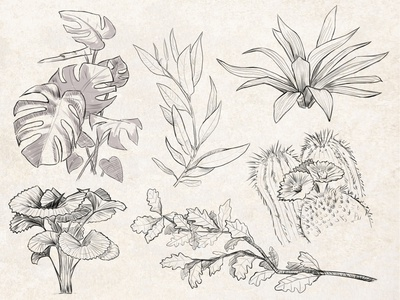 Sketches: Plants 3