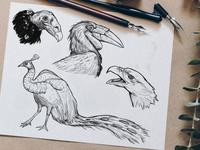 Sketches: Birds 1