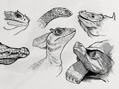 Sketches: Reptiles 1