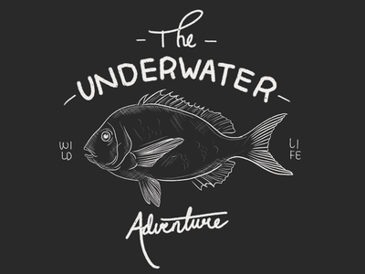 The Underwater Adventure procreate handdrawing handdrawn fish