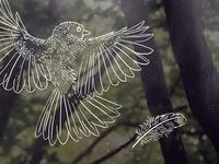 Uncharted - Bird