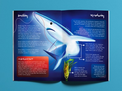Information Design - Sharks infographics infographic sharks editorial illustration shark art information science illustration information design biological biology graphic graphics design editorial editorial design graphic design illustration
